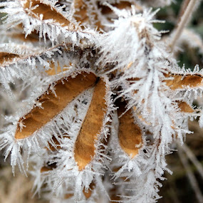 Freezing Fogs Beauty by Ann Marie - Nature Up Close Leaves & Grasses ( crystles, winter, fog, ice, freezing, frozen, leaves )