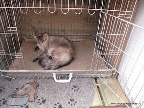 Photo: Sinjo vindt het wel een lekker bed