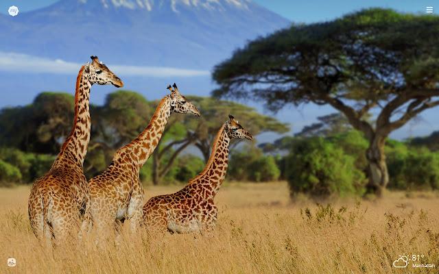 Kenya HD Wallpapers New Tab