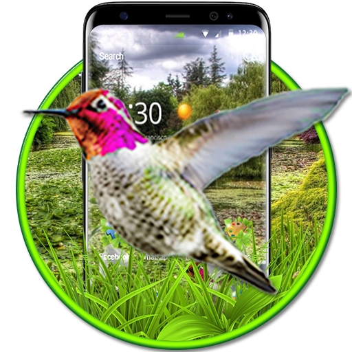 Live 3D HummingBird Theme