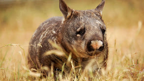 Realm of the Wombat thumbnail