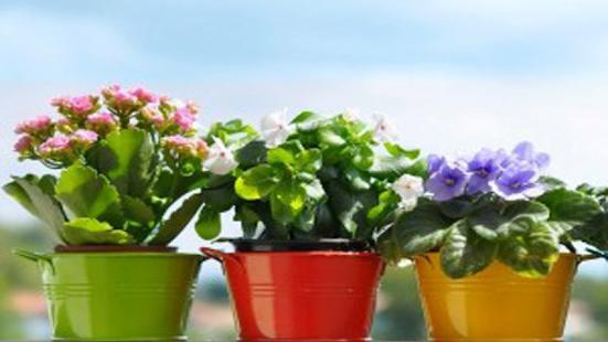 Planting Ornamental Flowers - náhled