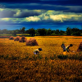 harvesting by Lhito  Trinidad - Landscapes Prairies, Meadows & Fields ( harvest, landscape )