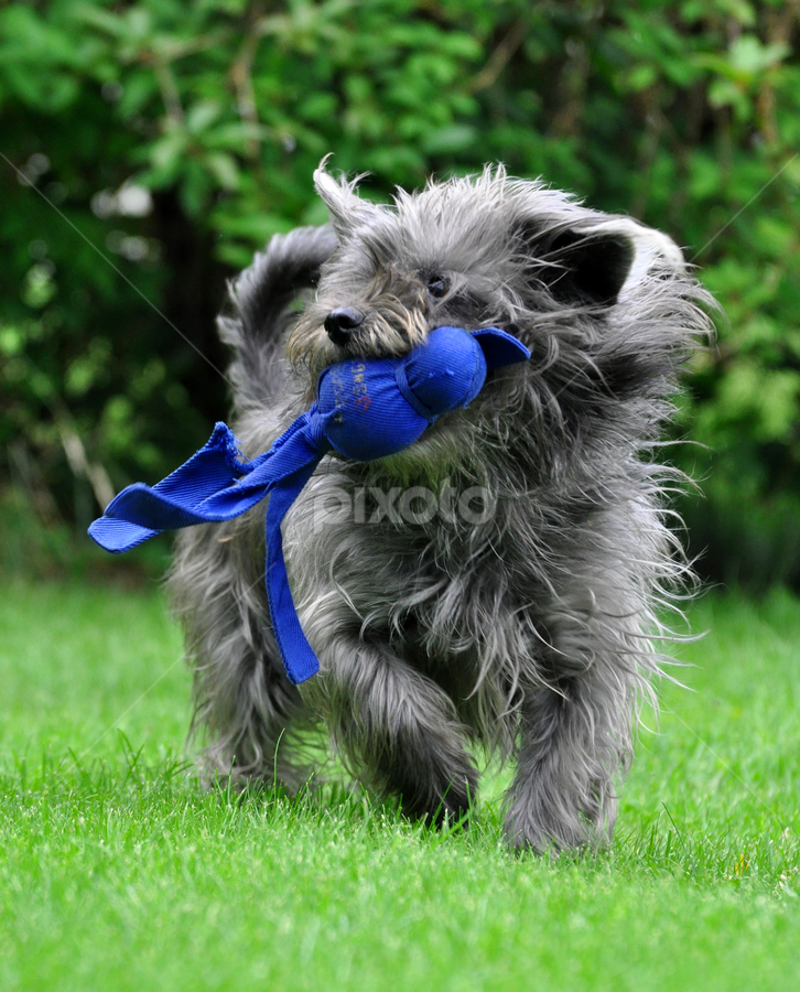 by Heidi Emanouel  - Animals - Dogs Playing