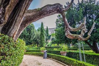 Photo: Old cypress tree in Villa d'Este in Tivoli, Lazio, Italy