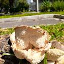 Maned Mushroom