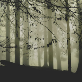 img.4304 by Eric Schoen  - Abstract Fine Art ( mystic, fantasy, e.schoen, mirowsky, fog, outdoor, faded, forest )