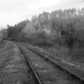 Студен пейзаж by Georgi Kolev - Black & White Landscapes ( треви., гори., небе., храсти., релси., камъни. )