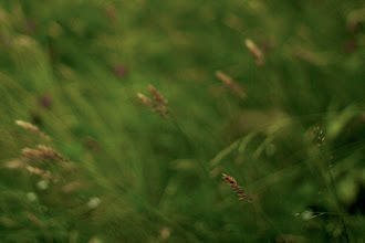 Photo: Summer breeze  #365project curated by +Susan Porterand +Simon Kitcher