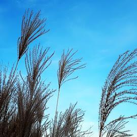 In a Gruga park_5 by Svetlana Saenkova - Instagram & Mobile Android ( blue sky, grass, nature up close, nature close up )