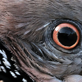 my eyes by Muhammad  Firdaus - Animals Birds