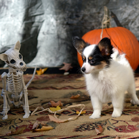 by Deanna Clark - Public Holidays Halloween (  )