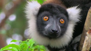 Africa: Madagascar thumbnail