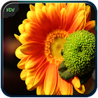Flowers GIf icon
