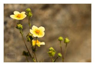 Photo: Eastern Sierras-20120717-754