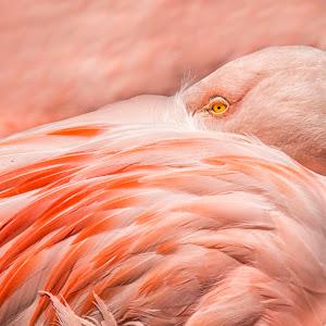 Sue Matsunaga Eye of The Flamingo.jpg