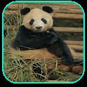 Panda Papel de Parede Animado icon
