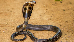 Island of Snakes thumbnail