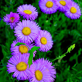 Wild Fower by Jennifer Parmelee - Flowers Flowers in the Wild ( water, green, colors, places, flowers )