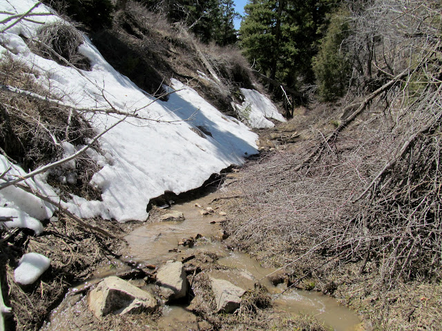 Small drainage flowing with snowmelt