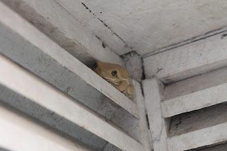 Photo: rana escondida - versteckter Frosch