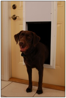wall pet door