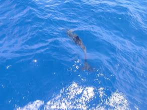 Photo: Дельфин/Dolphin