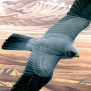 App Icon for Birds of the Middle East App in Czech Republic Google Play Store