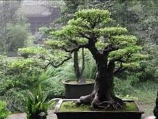 日本の盆栽のデザインのアイデアのおすすめ画像1