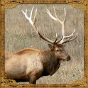 Elk Sounds icon