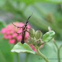 Flower Moth
