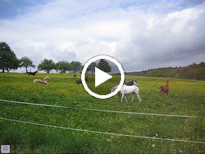 Video: Galoppade