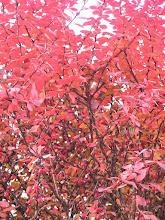 Photo: BB040386 Ojcow - kolory jesieni