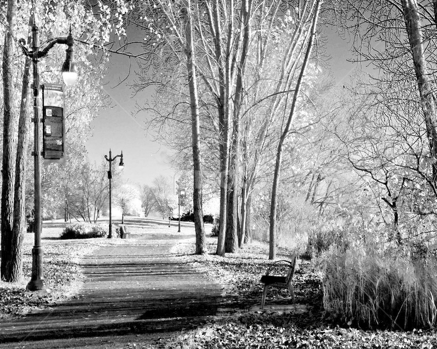 Walk In The Park by Luc Belisle - City,  Street & Park  Vistas ( park, walk )