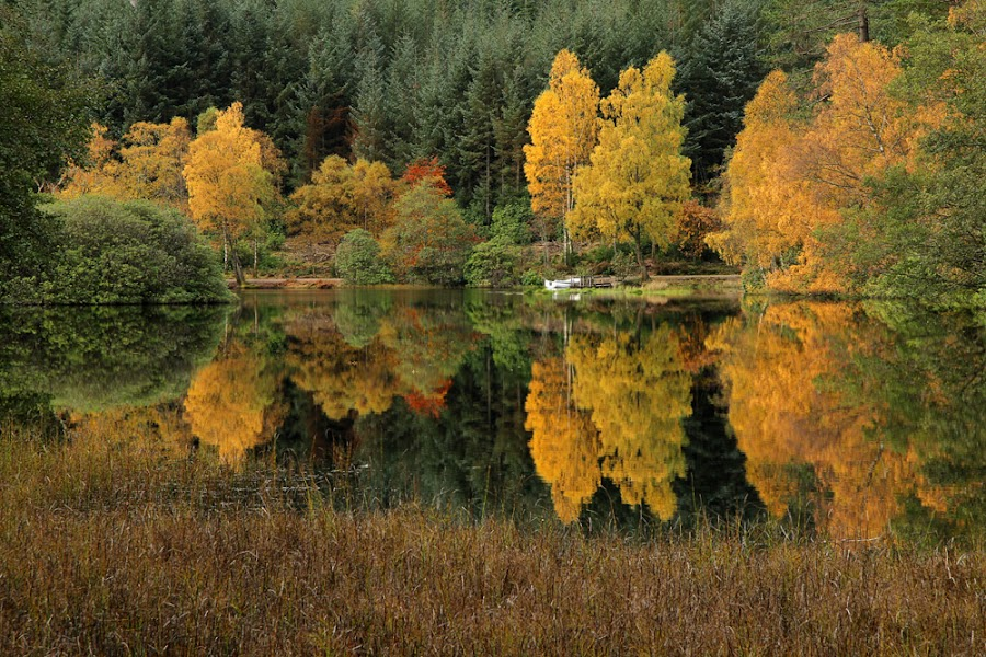 Lochan by Wolfy Pic - Landscapes Forests