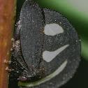 Mimica Treehopper / Soldadinho