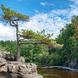 standing tall by Jody Jedlicka - Nature Up Close Trees & Bushes ( minnesota, evergreen, travel, state park, st croix )
