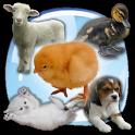 Baby Animals Sound Quiz! icon