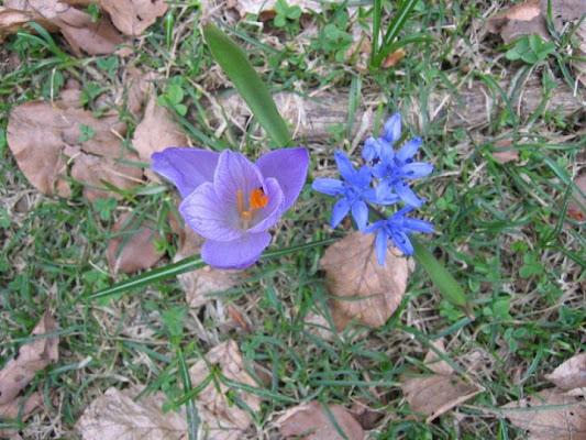 I due fiorellini di victor76