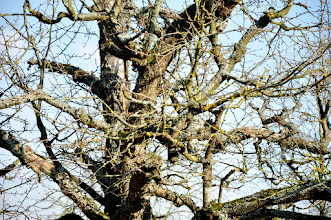 Photo: bumfuzzeld branches color