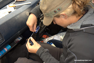 Photo: Georgy's photo: Liz measures each primary feather's length