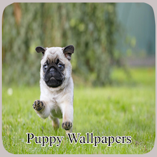 Puppy Wallpapers for PC / Windows 7, 8