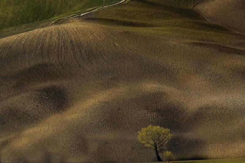 Morbide colline di paolo1954