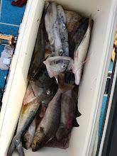 """Photo: """"タムラさん""""の釣果! 夜中、調子悪く休んでいたので イカは少なめ。"""