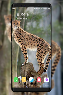 Cheetah Wallpaper - náhled