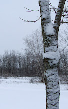 Photo: Snow sticking to the side of the tree.