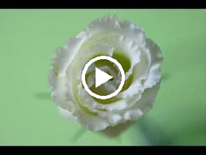 Video: A. Vivaldi  Dresden concerto for violin, strings   b.c. in D minor (RV 240)   Accademia Filarmonici -