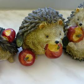 The hedgehog family by Helena Moravusova - Artistic Objects Still Life