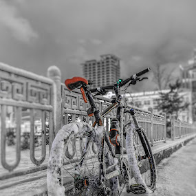My Bicycle by Steel Hero - Transportation Bicycles