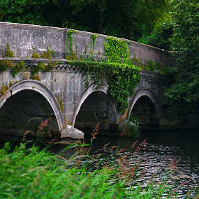 Carton House Bridge by Aaron Gould - Buildings & Architecture Bridges & Suspended Structures ( ireland, green, stone, bridge, river )